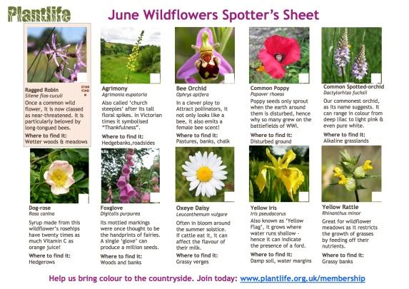 June_spotters_sheet2015