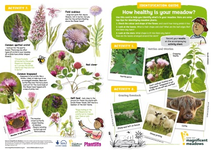 meadow-id-guide-web